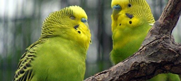 Papoušek je nejvtipnějším společníkem. Pro začínající chovatele jsou však vhodné jen některé druhy